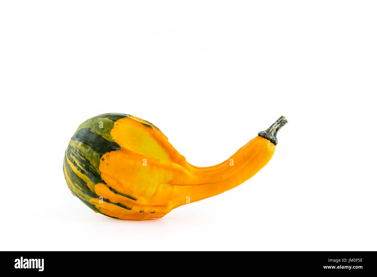 A single pumpkin (Crookneck squash) lies in front of a white background as a Cut-Outs - Stock Image