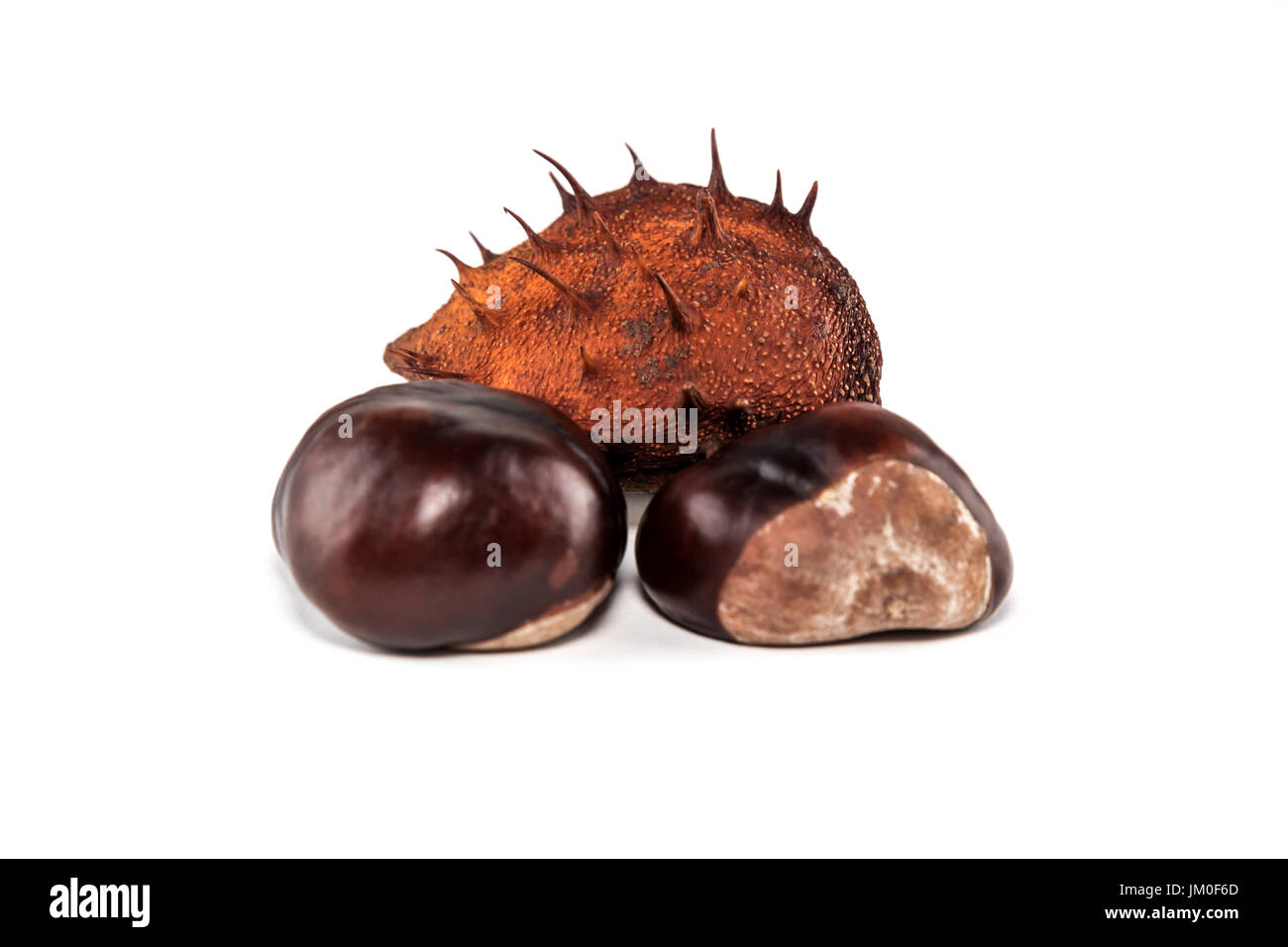 beechnut lie in front of white background, as a cut - Stock Image