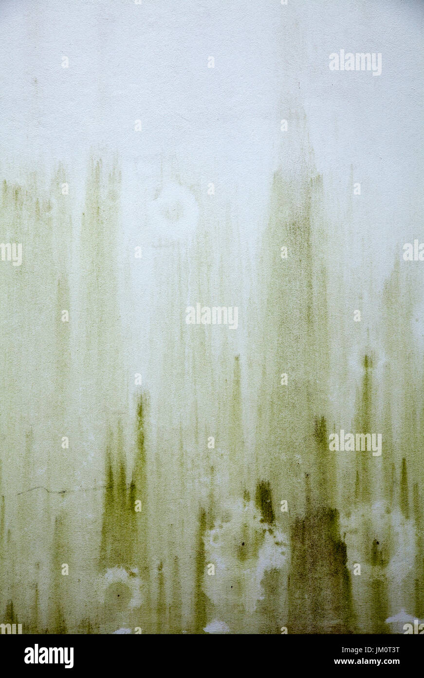 Green Damp Stains on Outdoor Wall - Stock Image