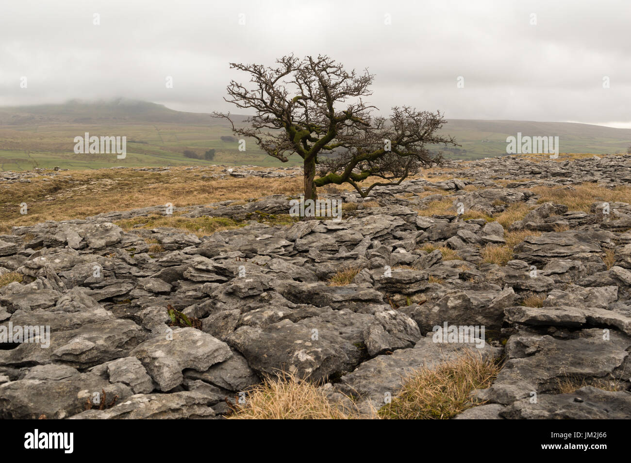 Pen-y-ghent Yorkshire Dales - Stock Image