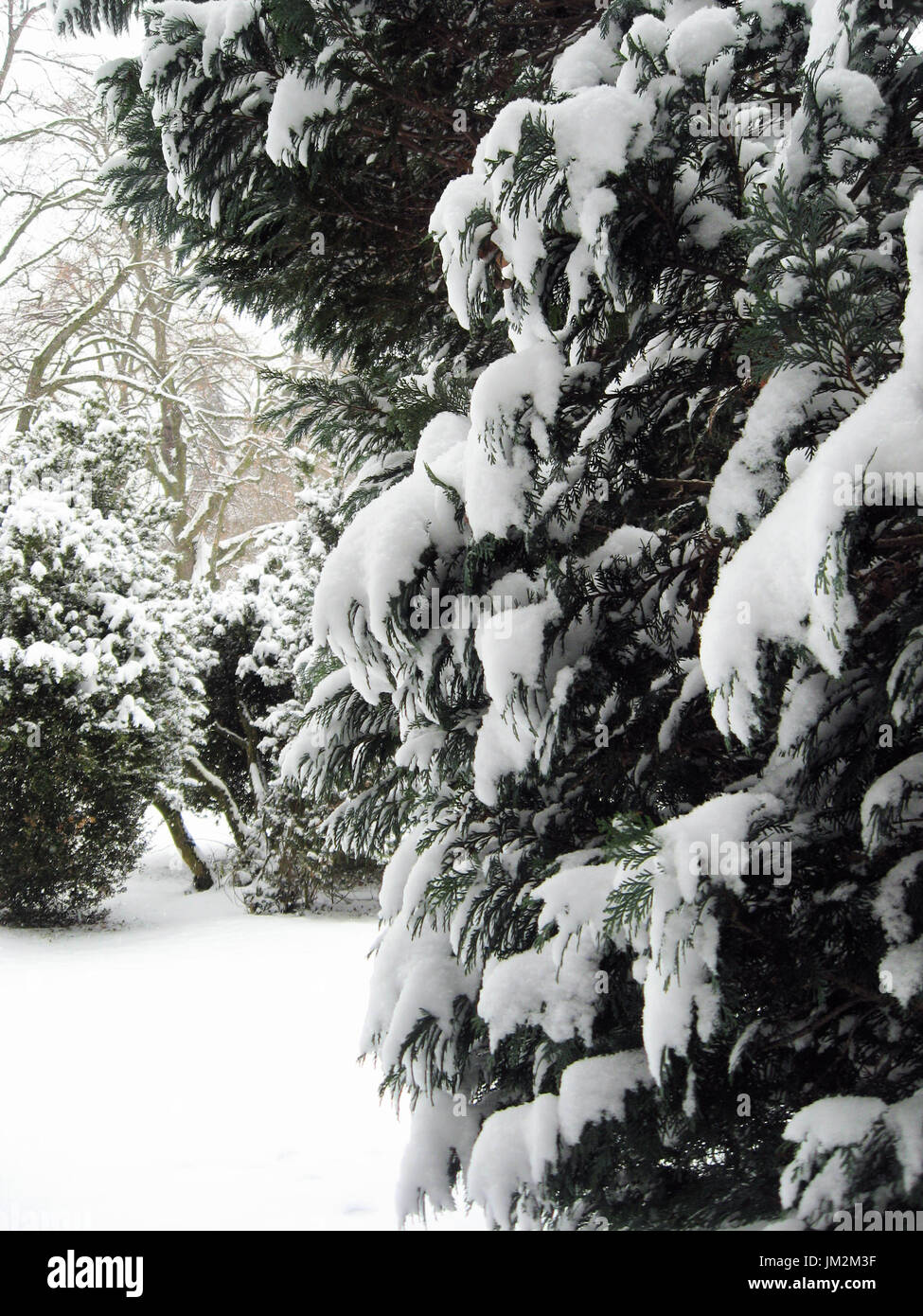 Snow falls on evergreen trees in a park in Basel Switzerland. - Stock Image