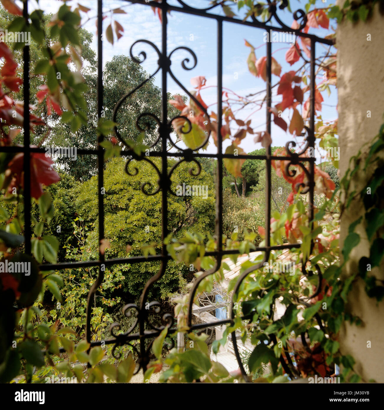 Vines growing on gate - Stock Image