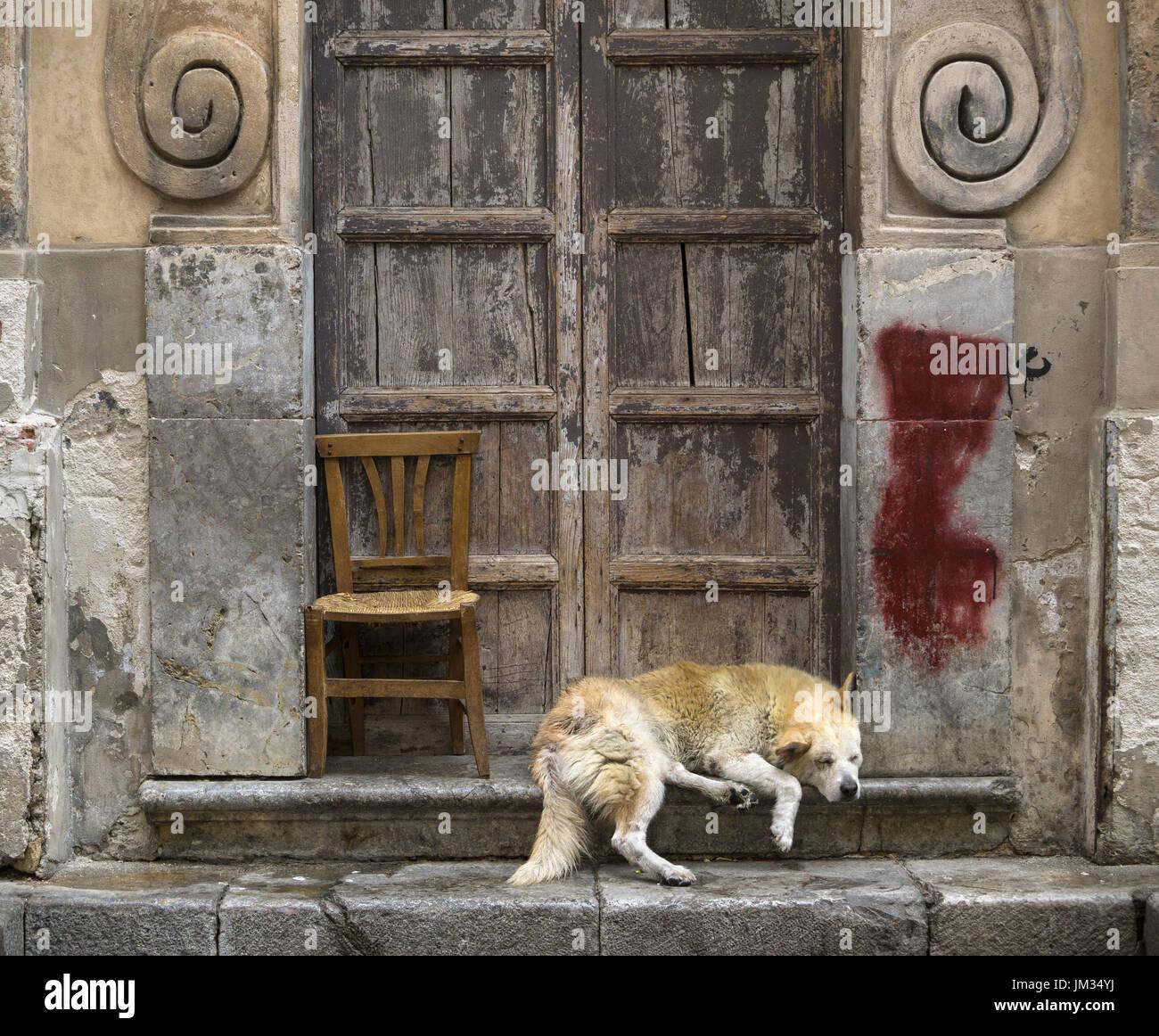 Sleeping dog in a Baroque church doorway, in the Via Porto Carini, Capo market, Central Palermo. - Stock Image