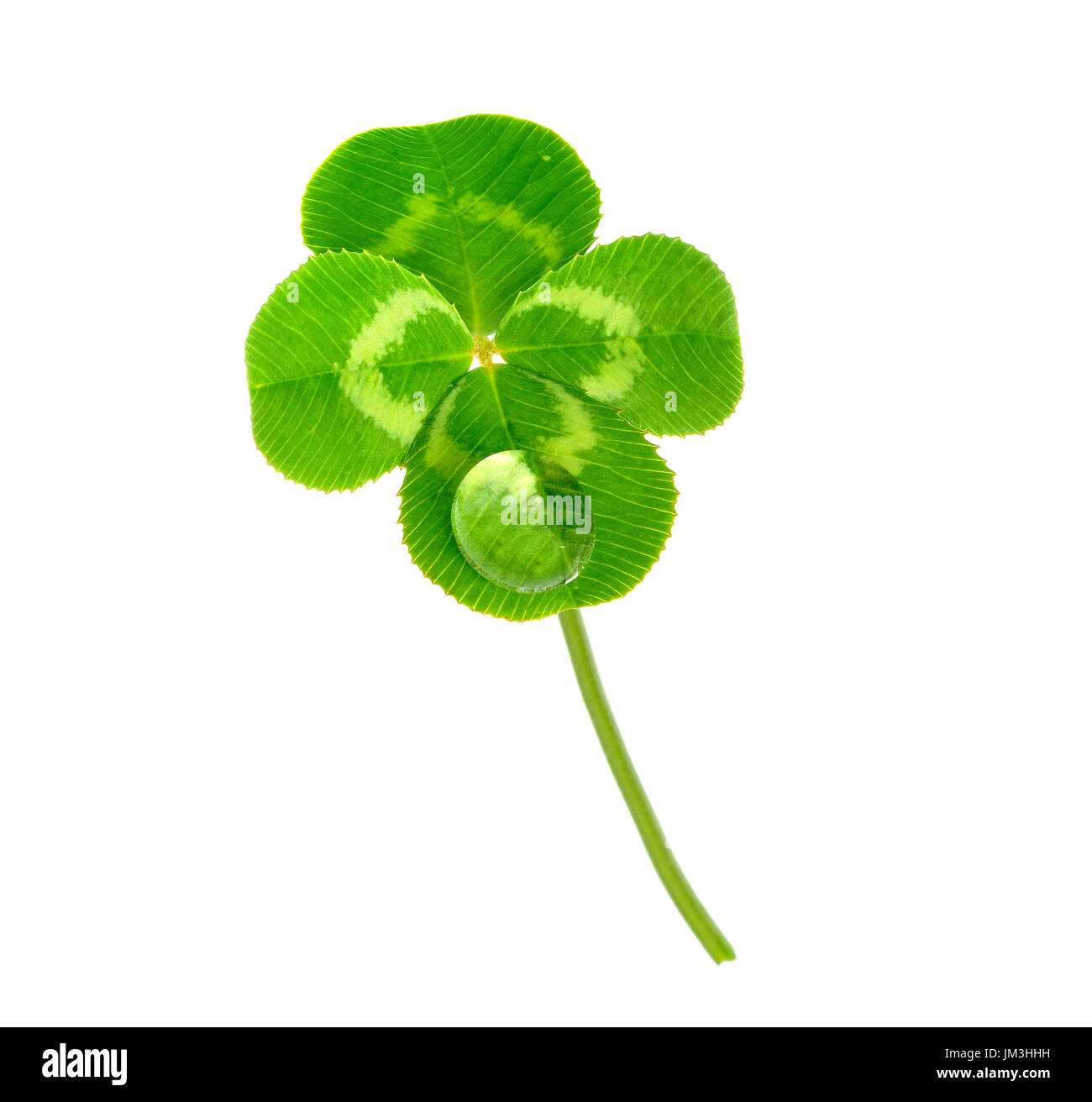 lucky clover isolated on white background Stock Photo