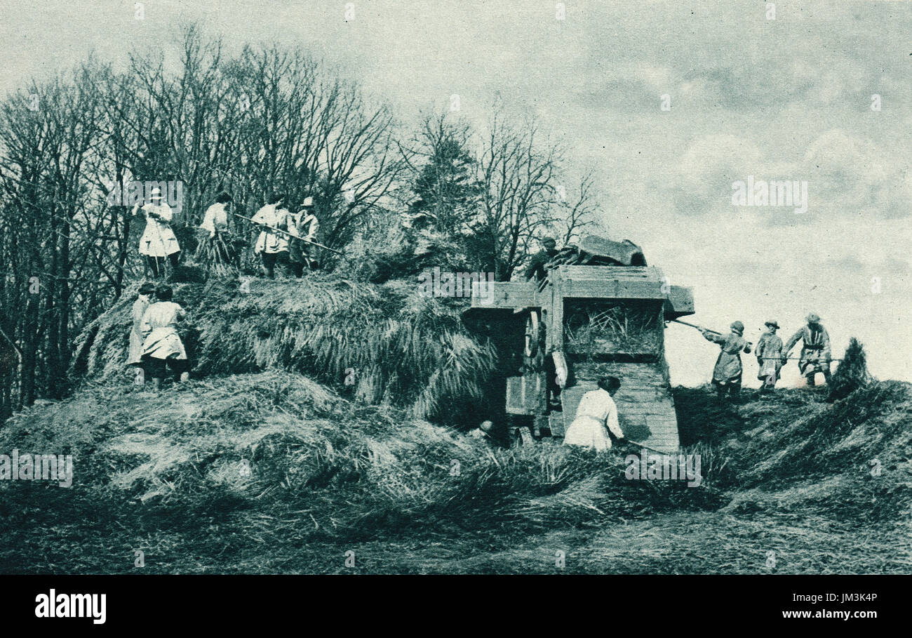 Women's land army at work on a rick, ww1 - Stock Image