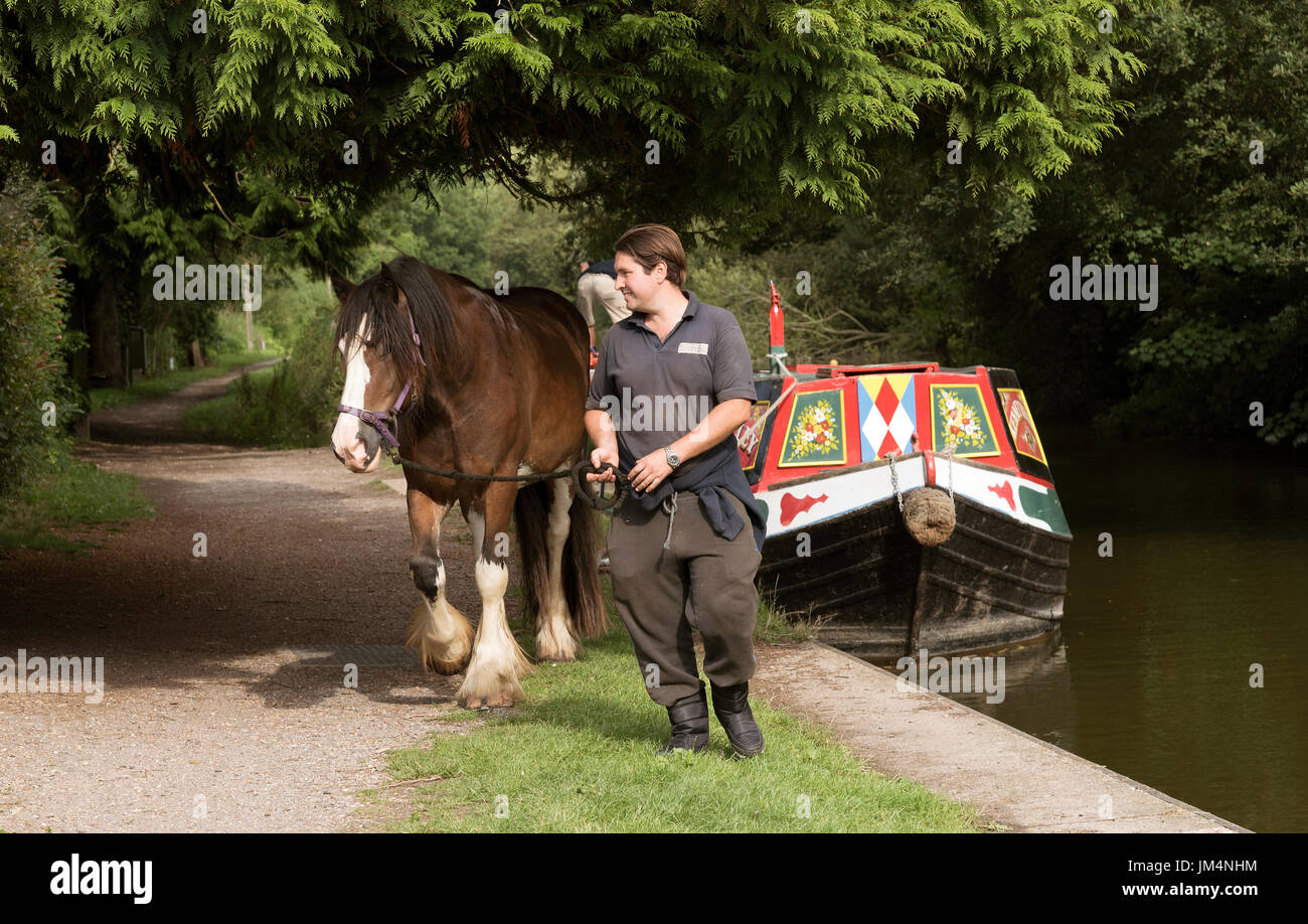 Horse drawn boat trip on the Kennet & Avon Canal at Kintbury, Berkshire,England UK Handler moving the Clydesdale Cob along a towpath. - Stock Image