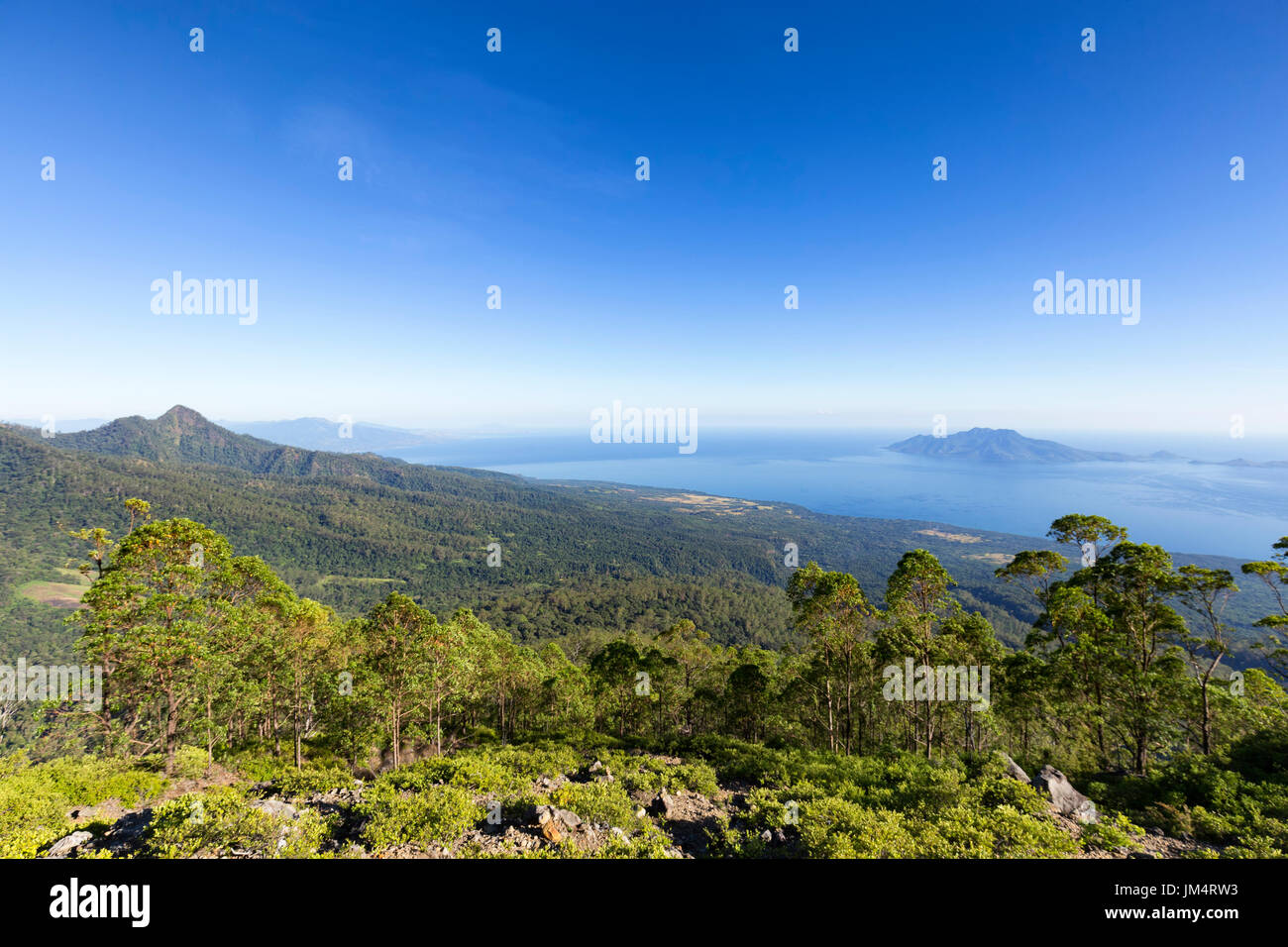 View of the edge of the treeline before low lying scrubs take on the side of Mount Egon, a stratovolcano, in Flores, Indonesia. - Stock Image