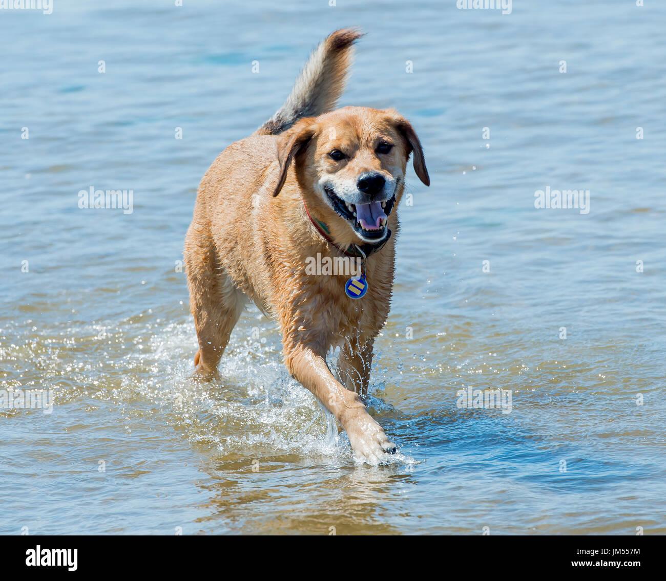 Dog With Floppy Ears Stock Photos & Dog With Floppy Ears Stock ...