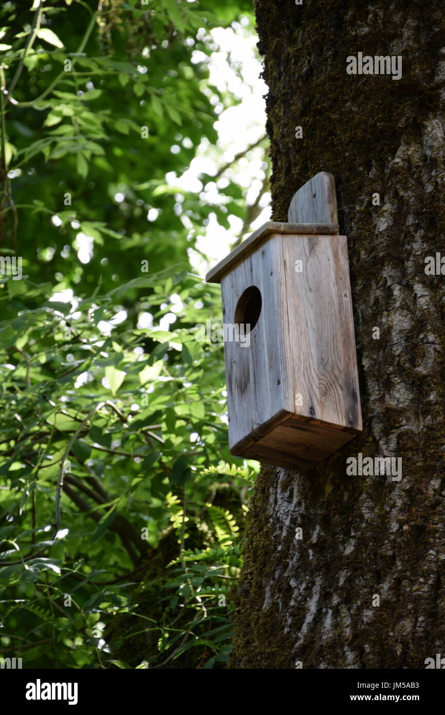 Bird house on the tree in the park Stock Photo