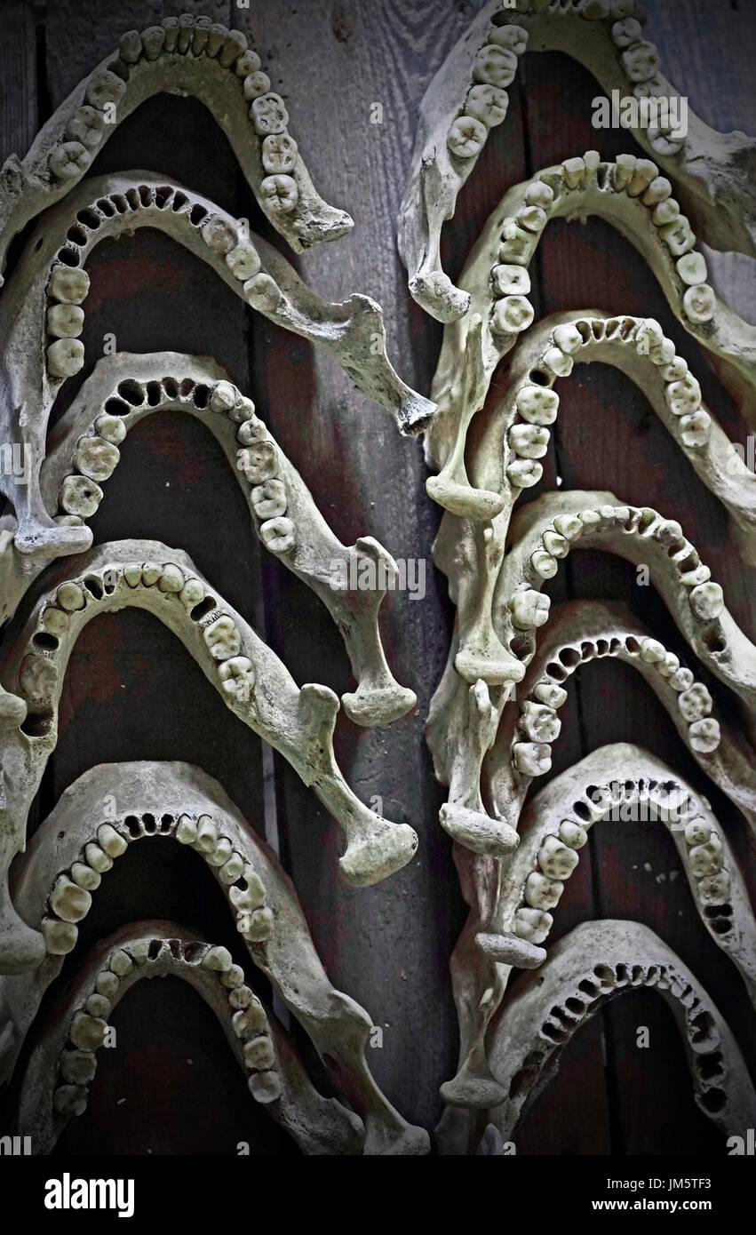 human jawbones - Stock Image