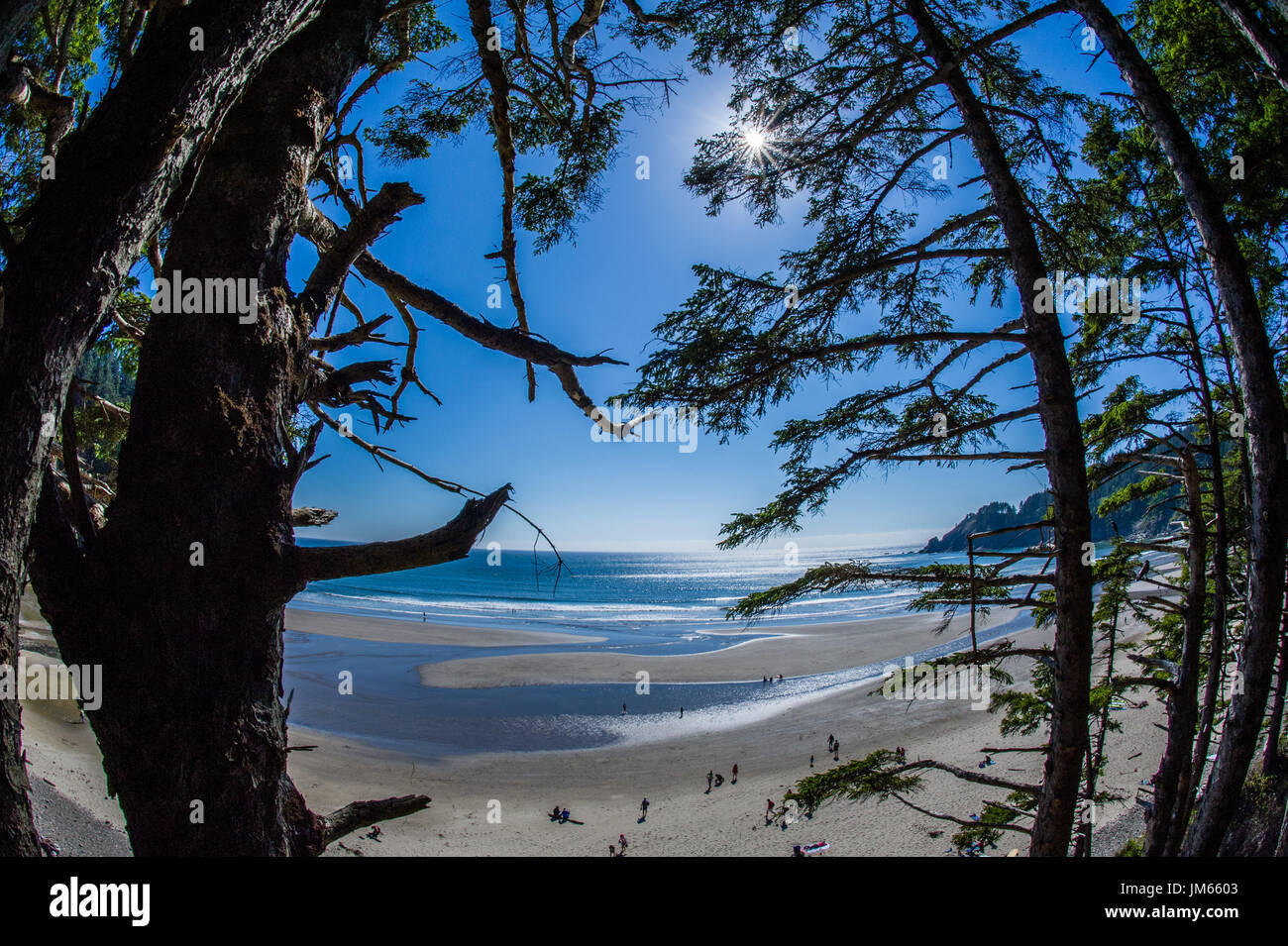 A view of Short Sands Beach in Oswald West State Park in Oregon - Stock Image