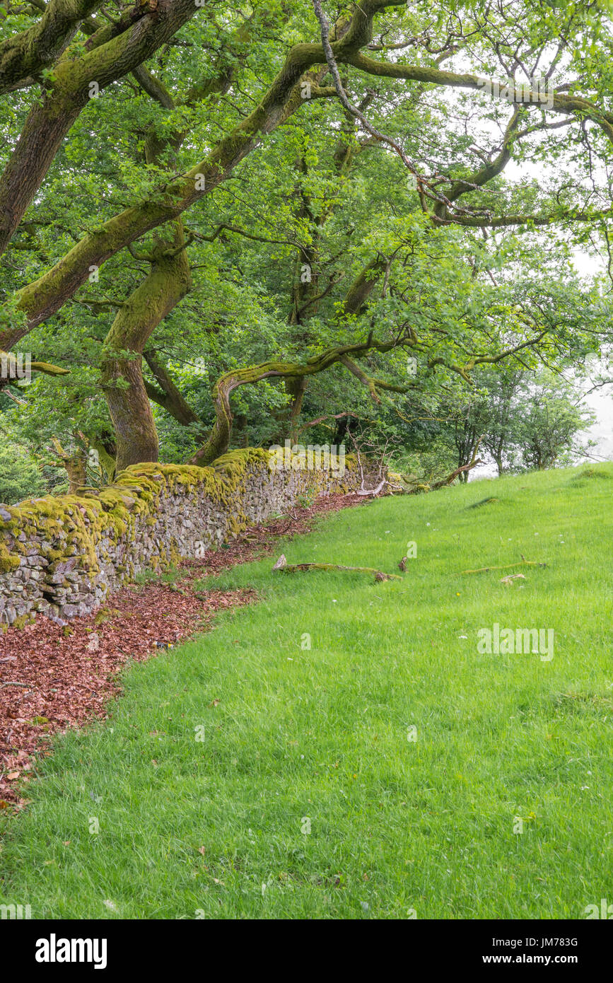 Scenery of the countryside farmland with stone made wall surrounding the farm. Image taken in United Kingdom. - Stock Image