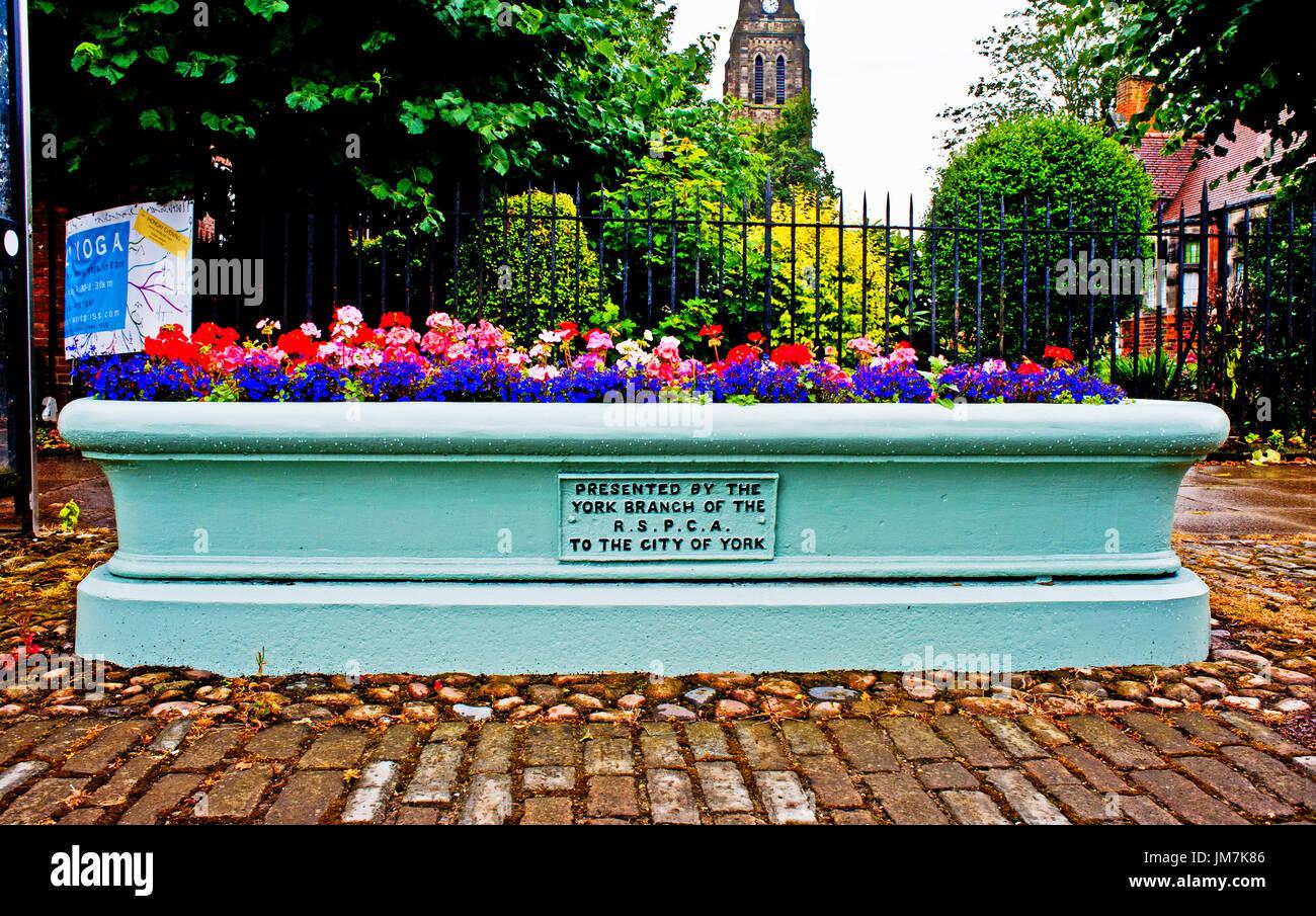 RSPCA donated Trough, Hull Road, Walmgate, York - Stock Image