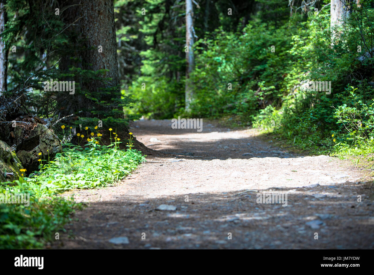 The beautiful walking paths welcome thousands of visitors every day to the incredible setting of the Canadian Rocky Mountains. - Stock Image