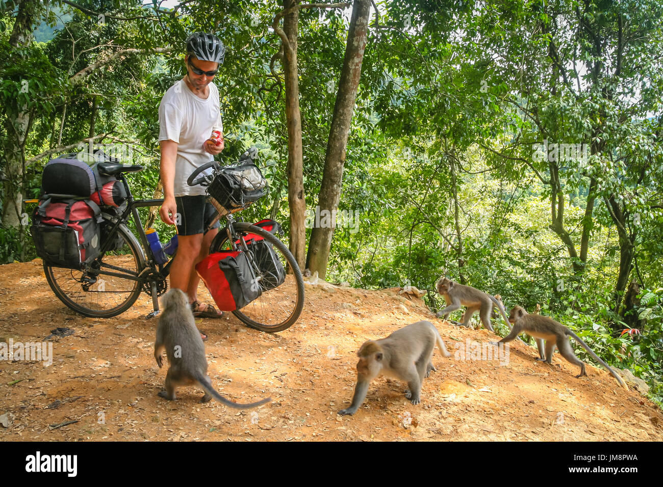 Male cyclist feeding group of monkeys while on a cycle touring trip in Bali, Indonesia - Stock Image