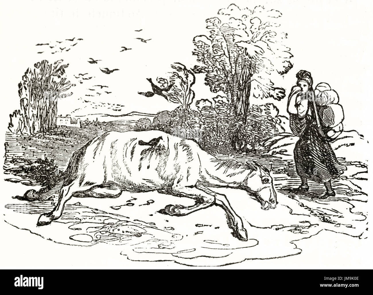 Old Illustration Of A Dead Horse By Unidentified Author Published Stock Photo Alamy