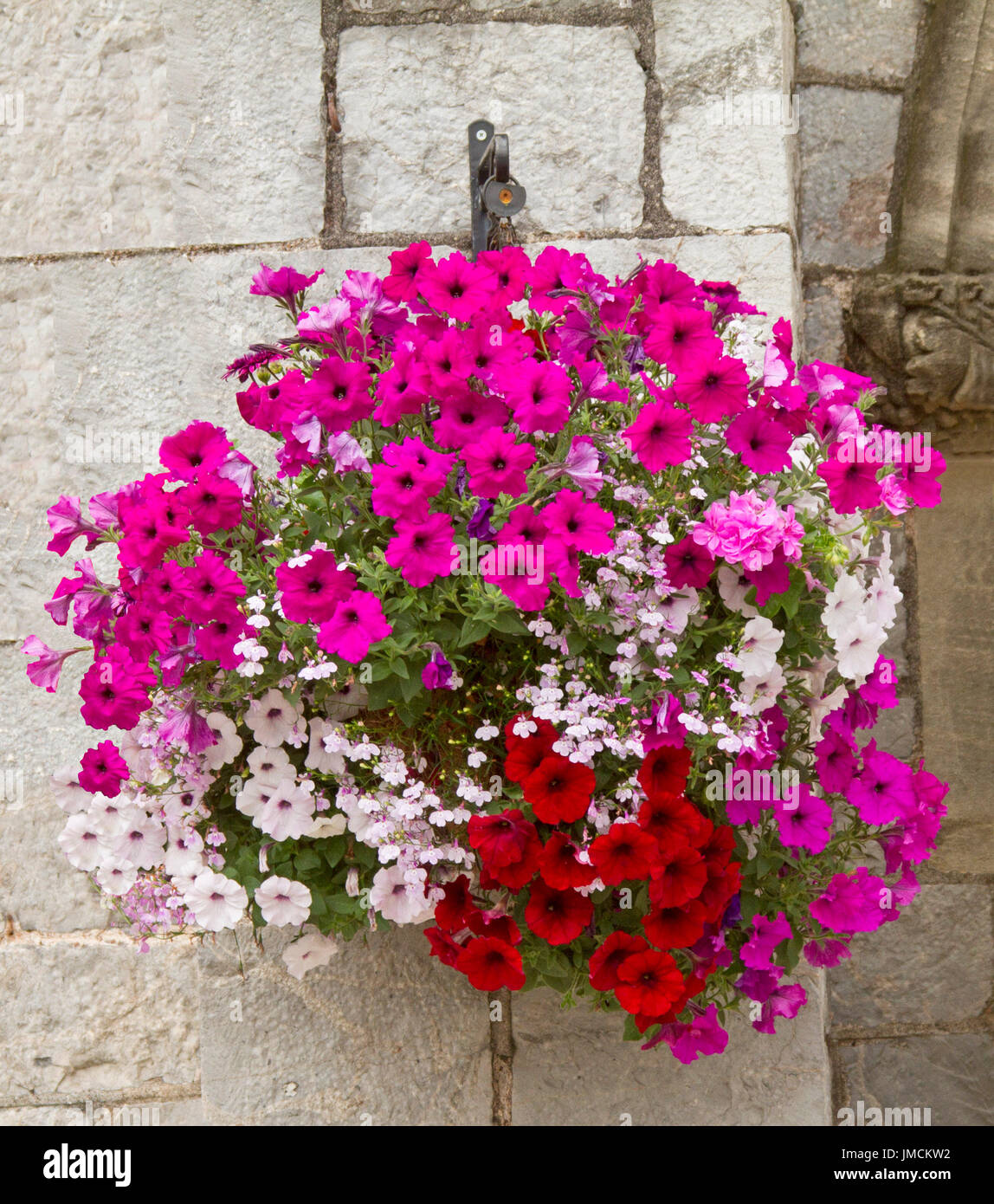 Spectacular Hanging Basket Of Vivid Flowers Inc Red Bright Pink