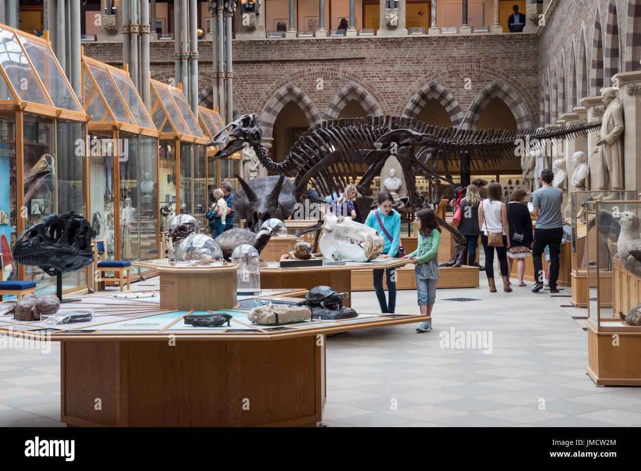 Internal view of the Natural History Museum, Oxford, England, UK. - Stock Image