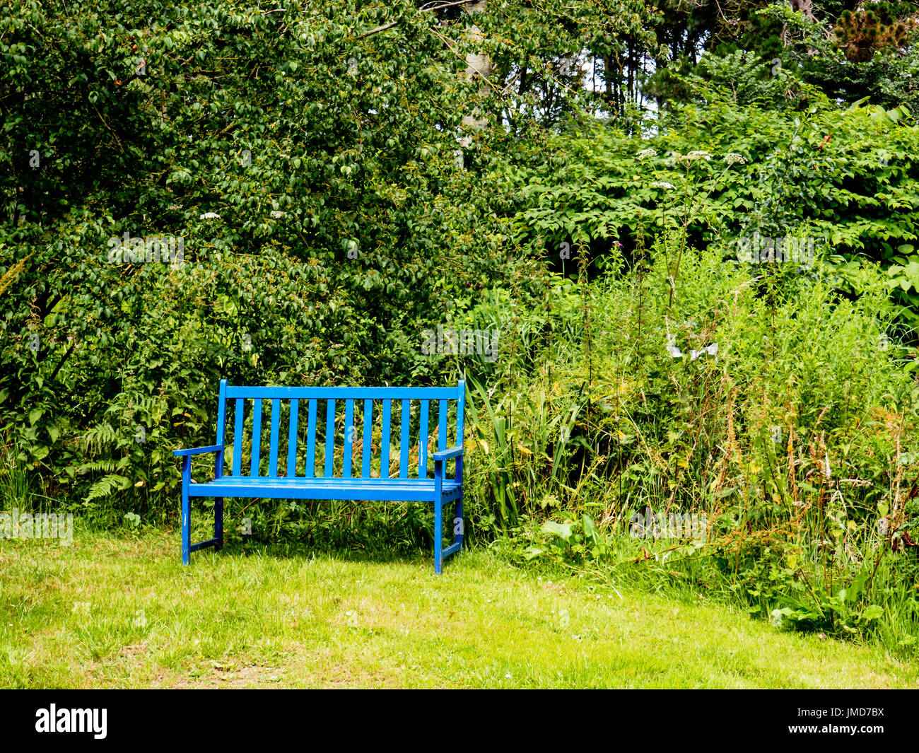 Outstanding A Bright Blue Bench Contrasts With Brilliant Green Shrubs Gmtry Best Dining Table And Chair Ideas Images Gmtryco