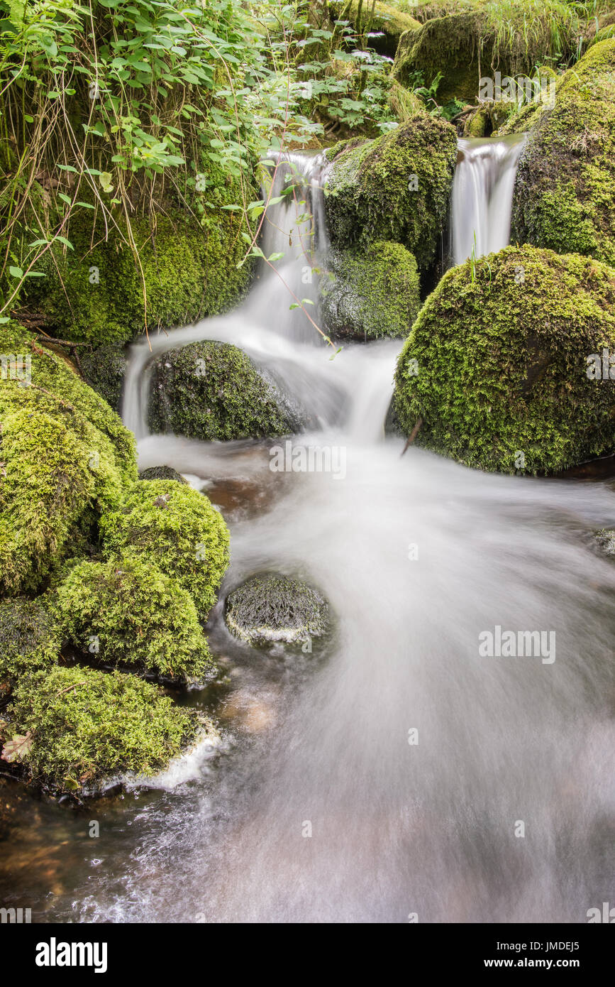 Small forest stream - Stock Image
