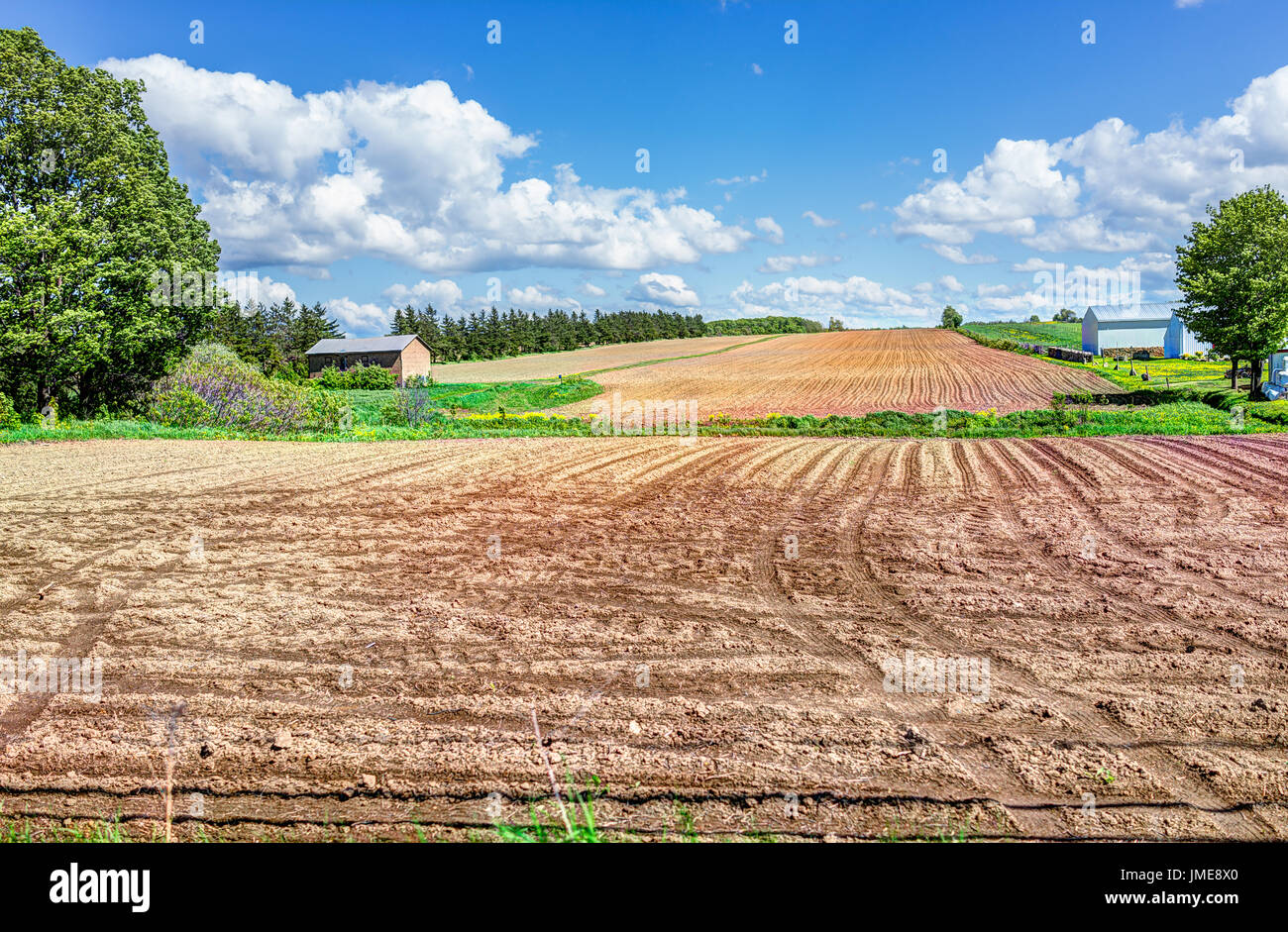 Ile D'Orleans landscape with brown raked field furrows in summer for potatoes and farm house - Stock Image