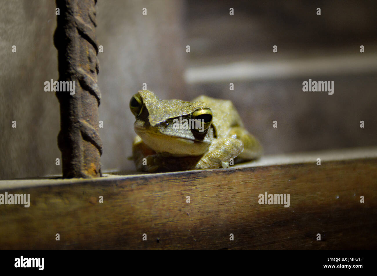 cute frog - Stock Image