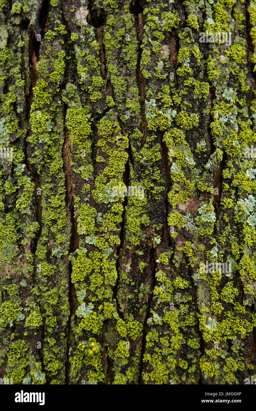 Textured background of a tree. - Stock Image