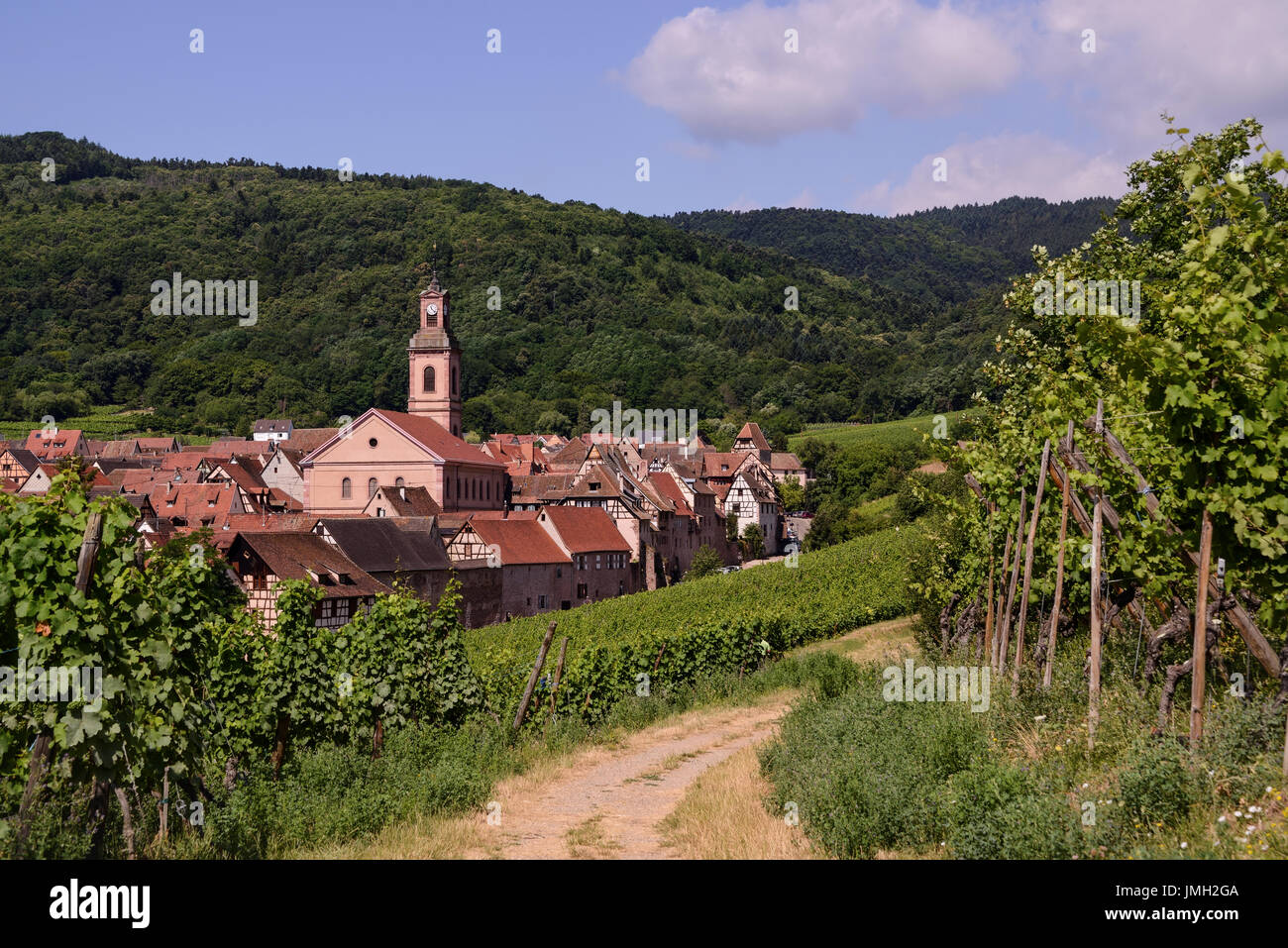 Wine yards around Riquewihr. One of many medieval towns in Alsace, France. - Stock Image
