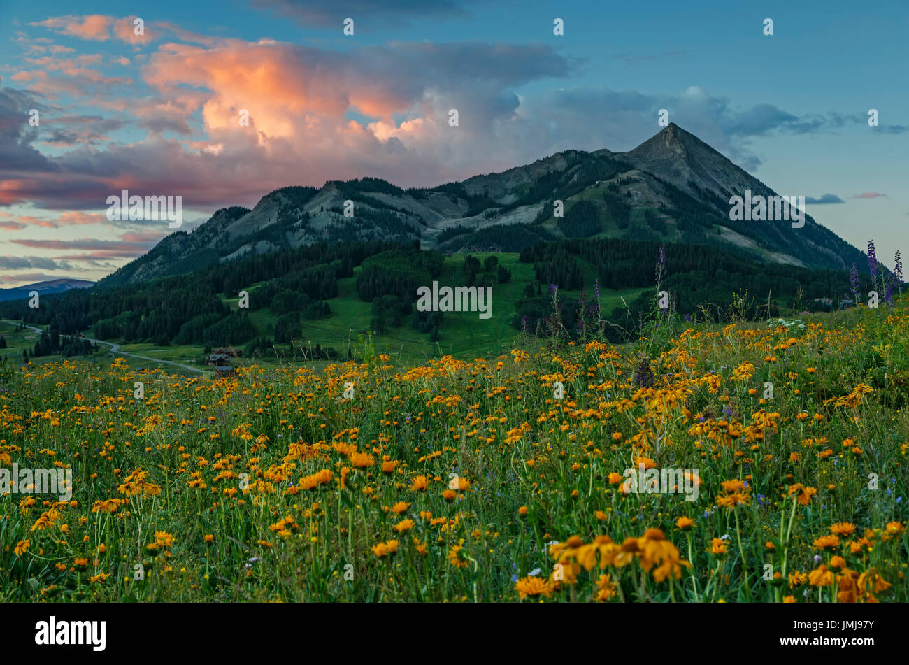 Wildflowers and Mount Crested Butte (12,162 ft.), Gunnison National Forest, near Crested Butte, Colorado USA - Stock Image