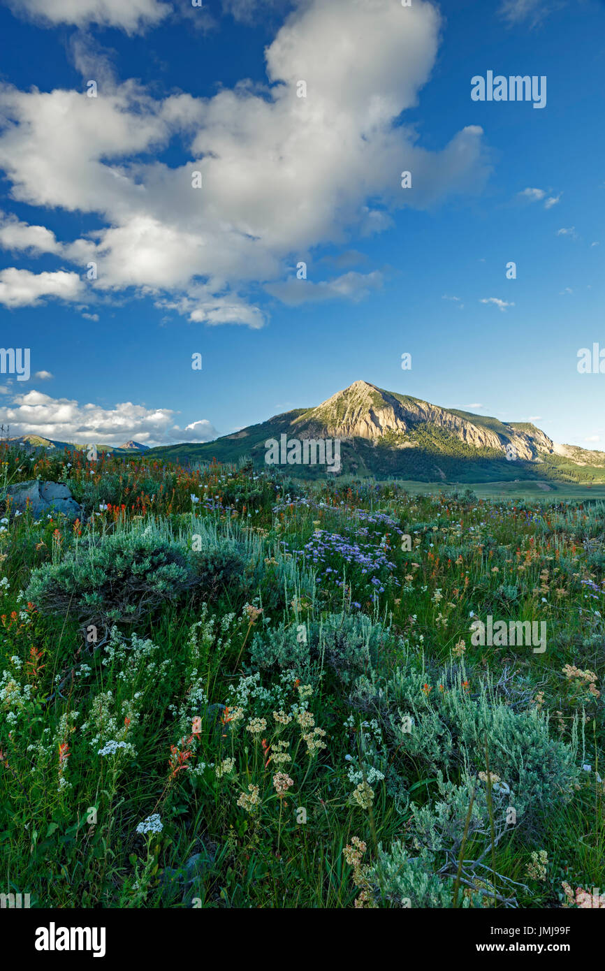 Wildflowers and Mount Crested Butte (12,162 ft.), Crested Butte, Colorado USA Stock Photo