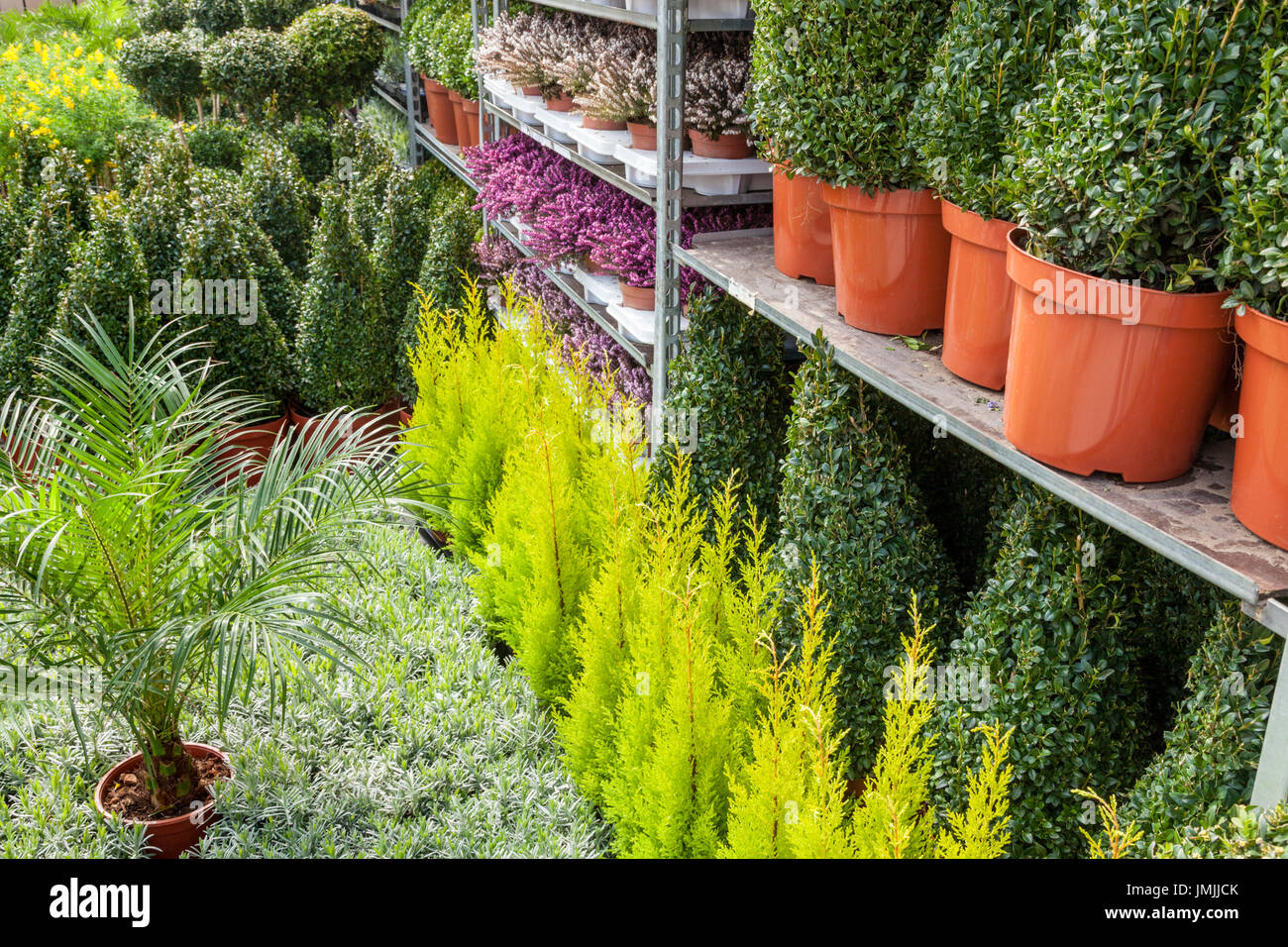 Many pot plants on the floor and stacked on shelves, UK - Stock Image