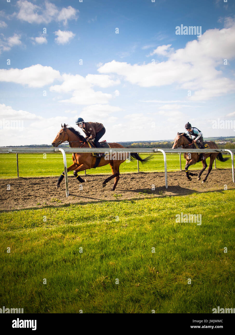 Thoroughbreds on Training Gallop at National Stud - Stock Image