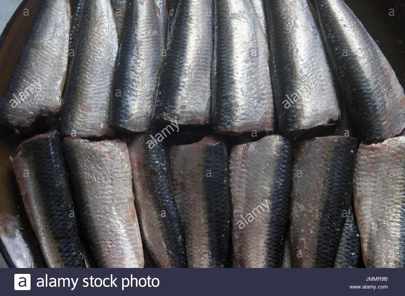 Raw sardines on plate. - Stock Image