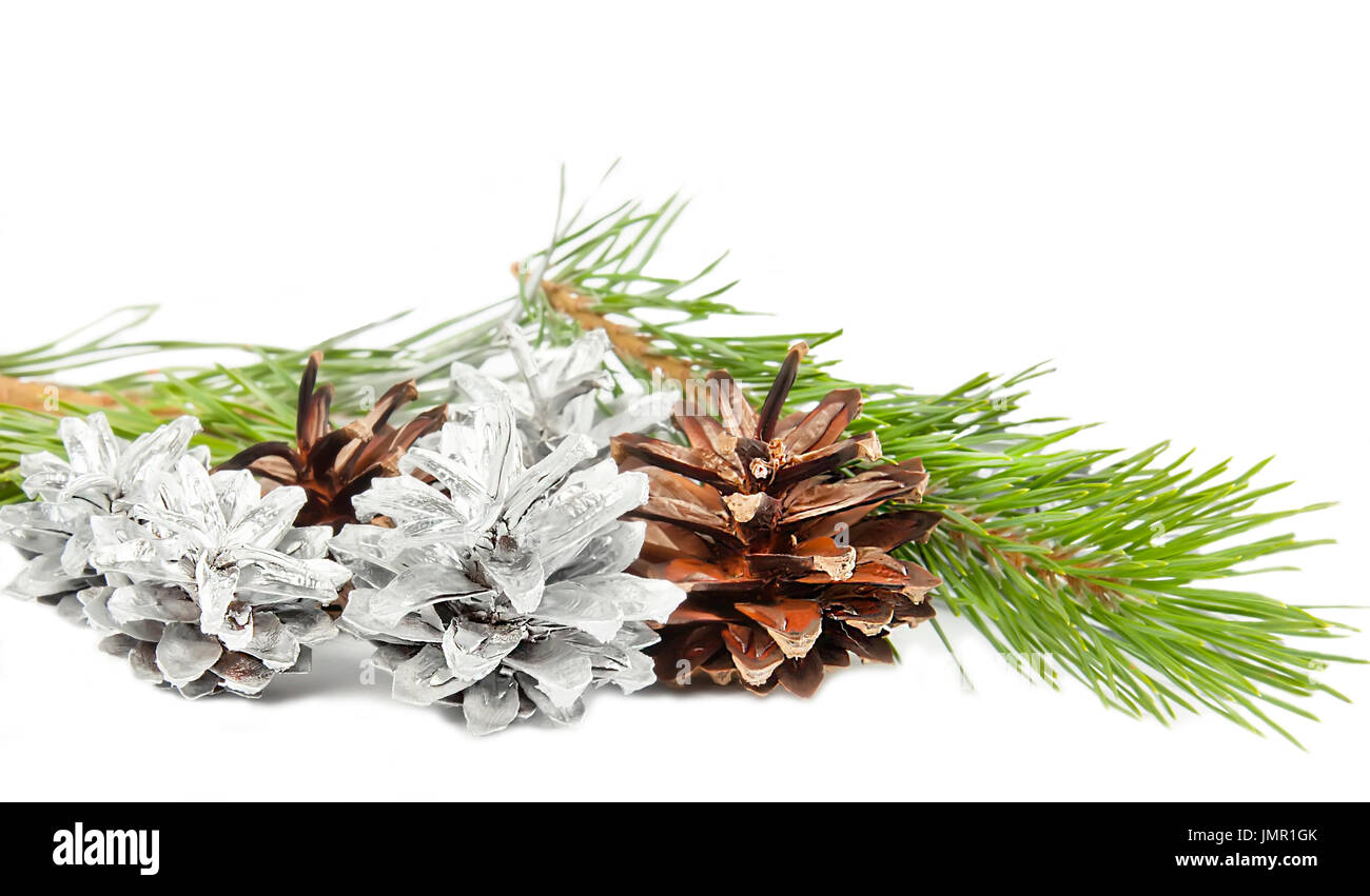 Green spruce twig with cones isolated on white background - Stock Image