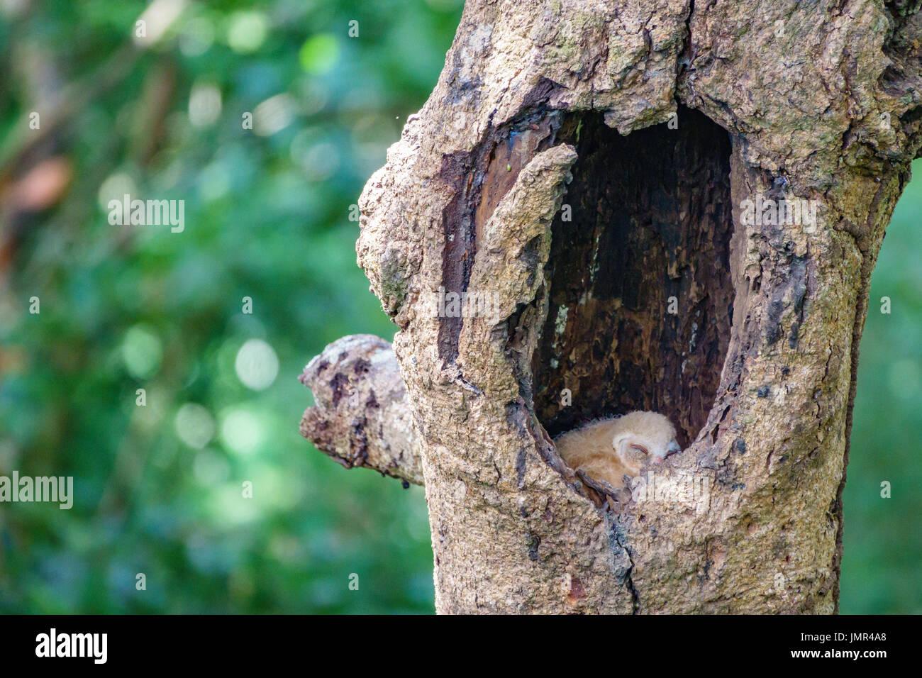 Baby Owls Sleeping Inside Tree Hole Stock Photo Alamy