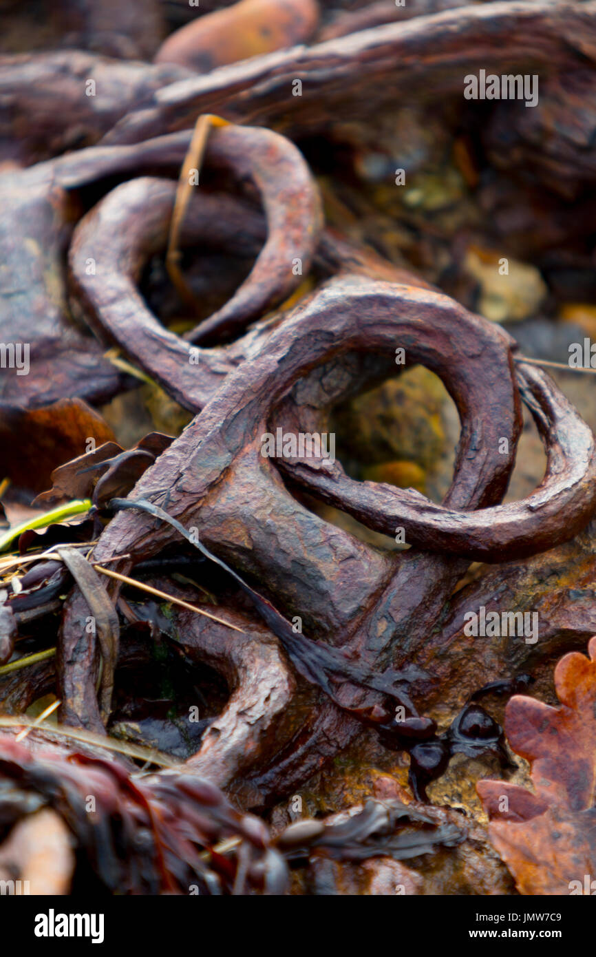 Very old rusty chain links lying on beach, Newtown Nature Reserve, Isle of Wight, UK, - Stock Image