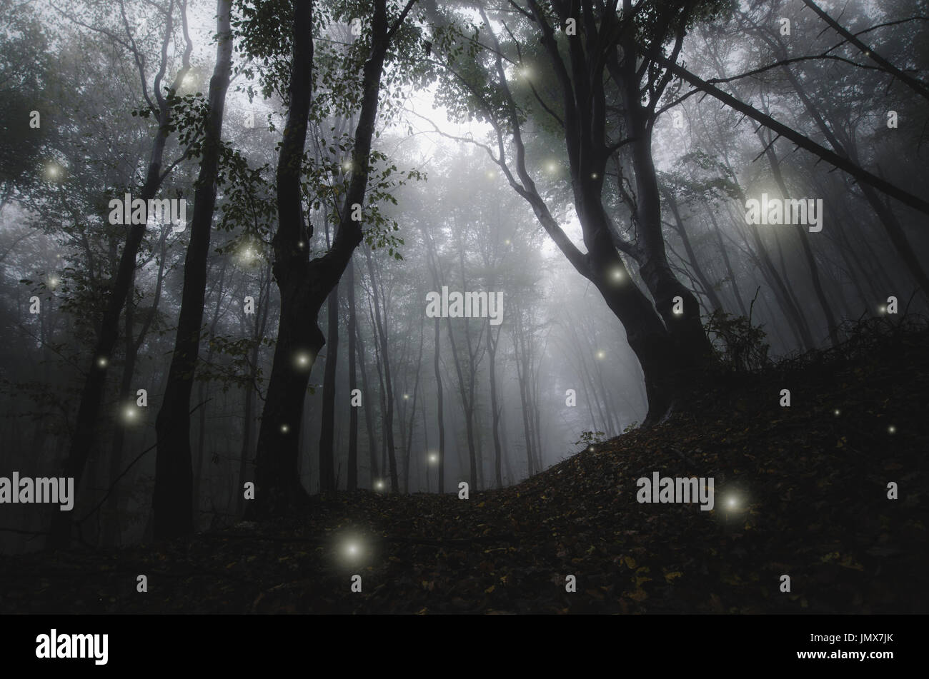magical sparkles in foggy woods, dark fantasy landscape - Stock Image