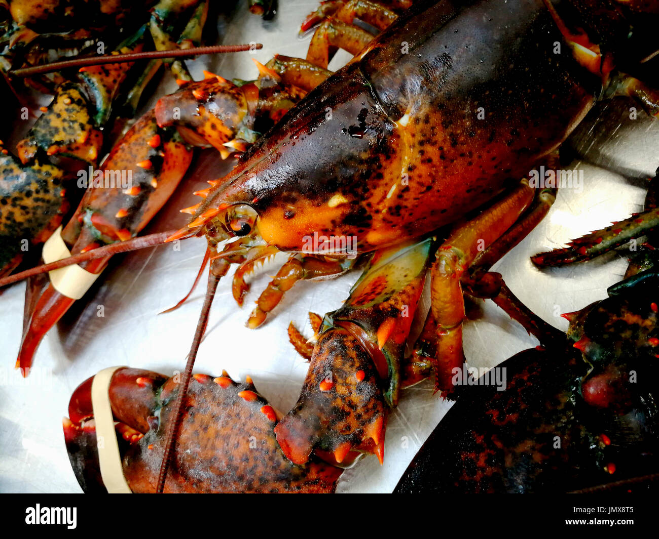 Live lobster in the market - Stock Image