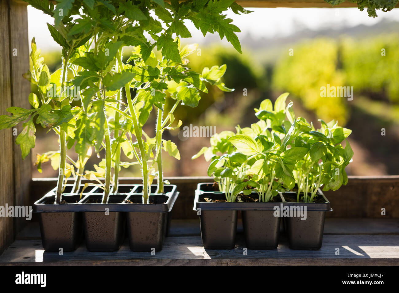 Various pot plants arranged on table in vineyard - Stock Image