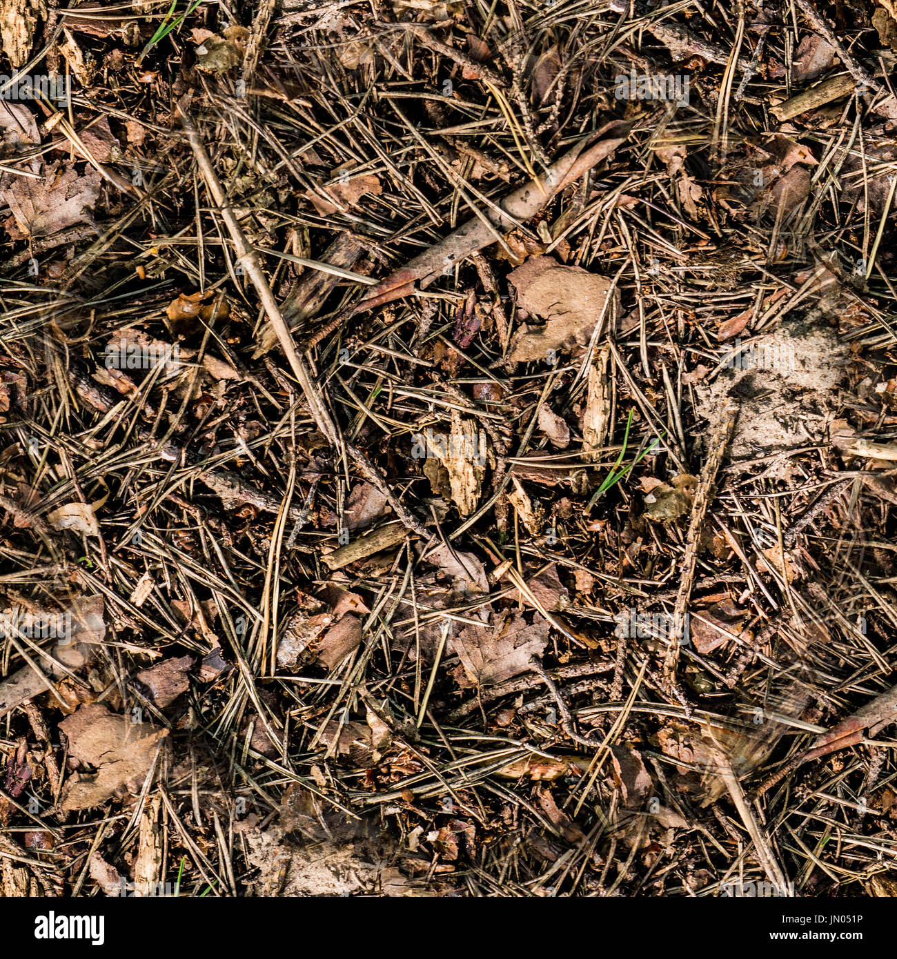 seamless dry brown summer forest ground background texture Stock