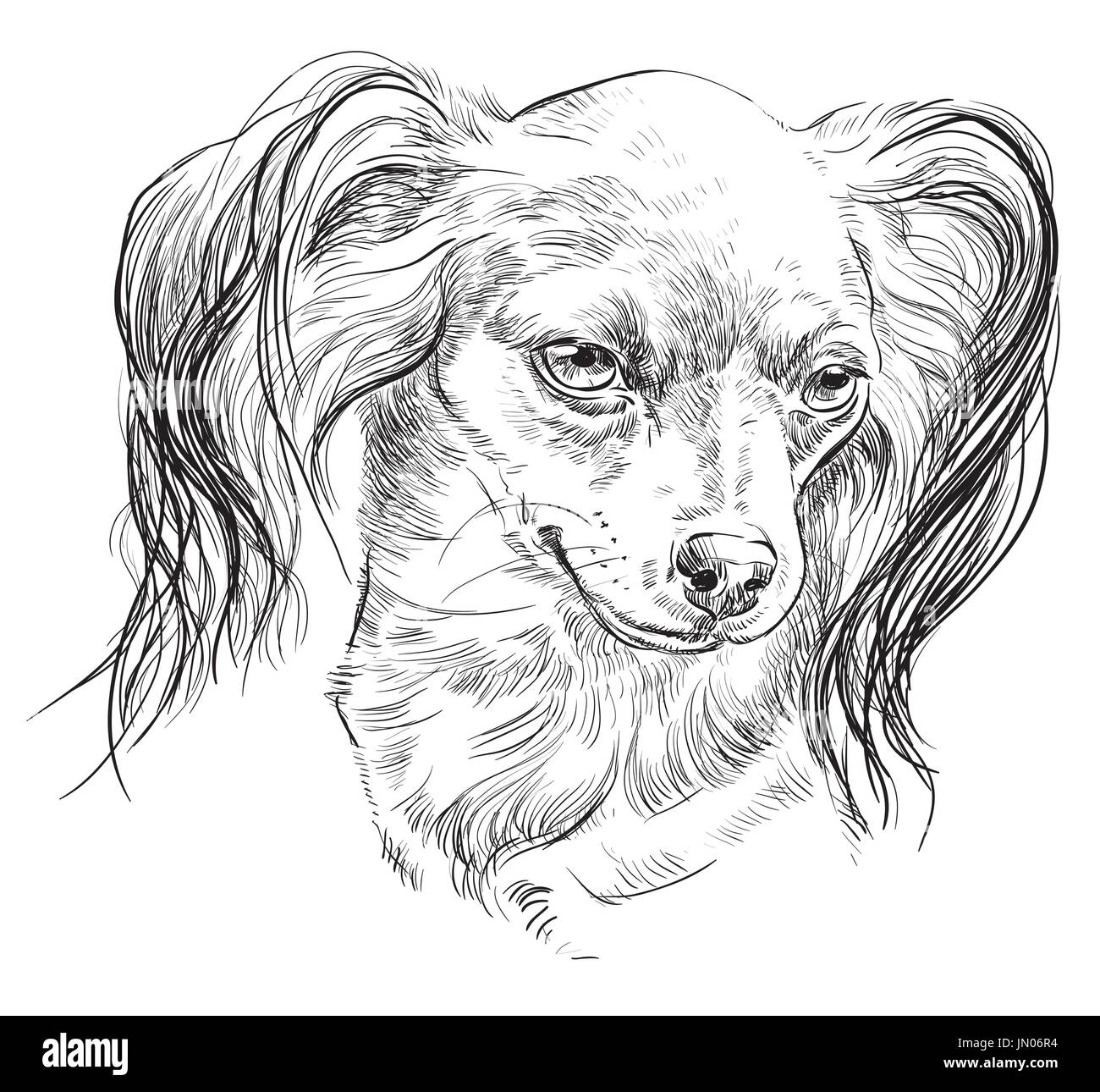 Vector outline portrait of Russian long-haired toy Terrier in black color hand drawing Illustration on white background - Stock Image