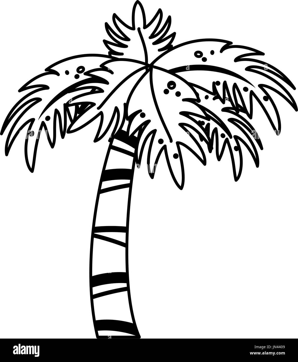 Coconut Tree Black And White Stock Photos Images