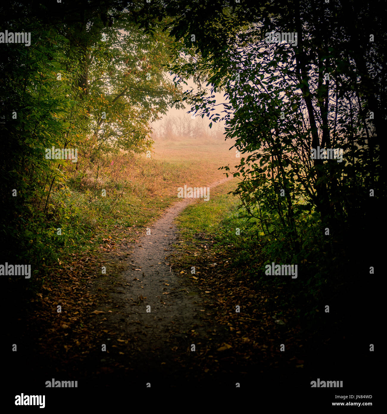 Dirt trail in the misty autumn forest - Stock Image
