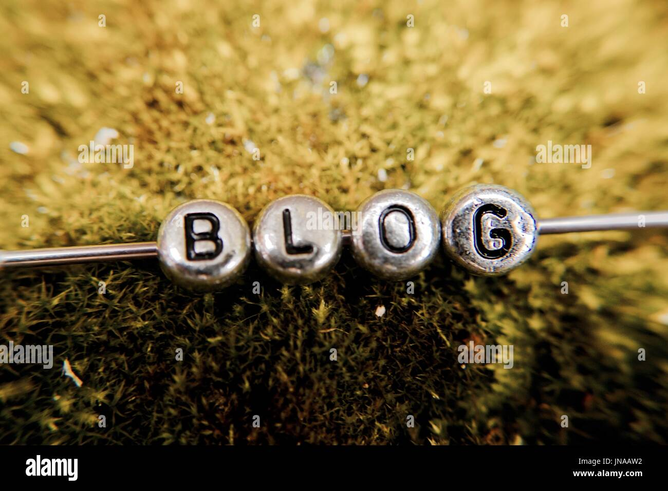 Small silver letters with blog sign on green natural grass in the forest. - Stock Image