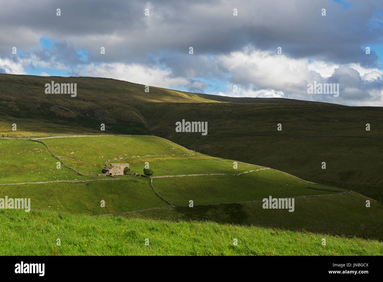 Farmhouse in Coverdale, Yorkshire Dales National Park, North Yorkshire, England UK - Stock Image