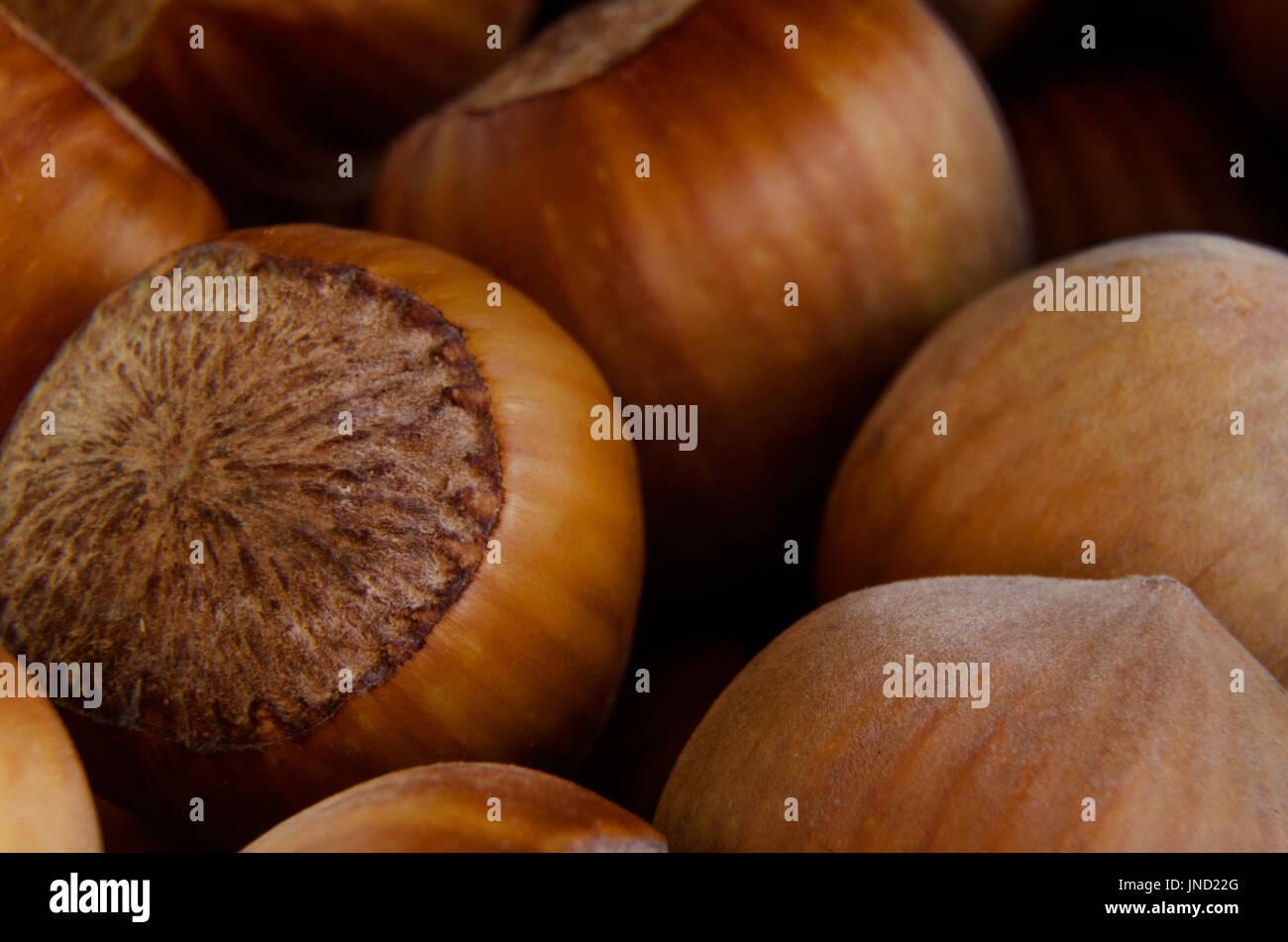 Macro photo of hazelnut heap; Focus on the nearest part Stock Photo
