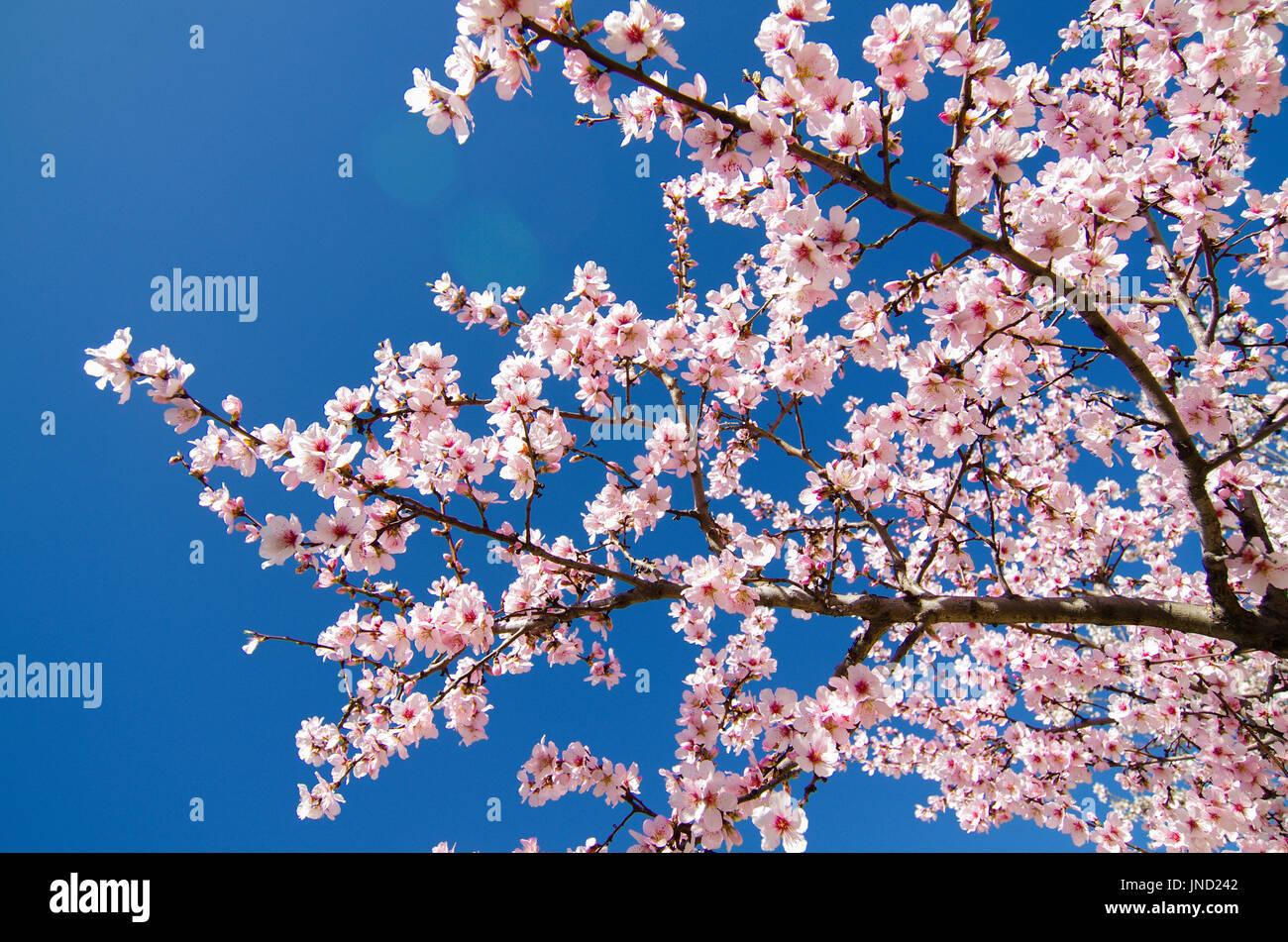 Flowering Tree Spain Stock Photos Flowering Tree Spain Stock