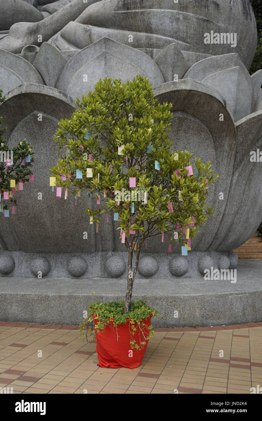 wishing tree at Buddhist temple - Stock Image