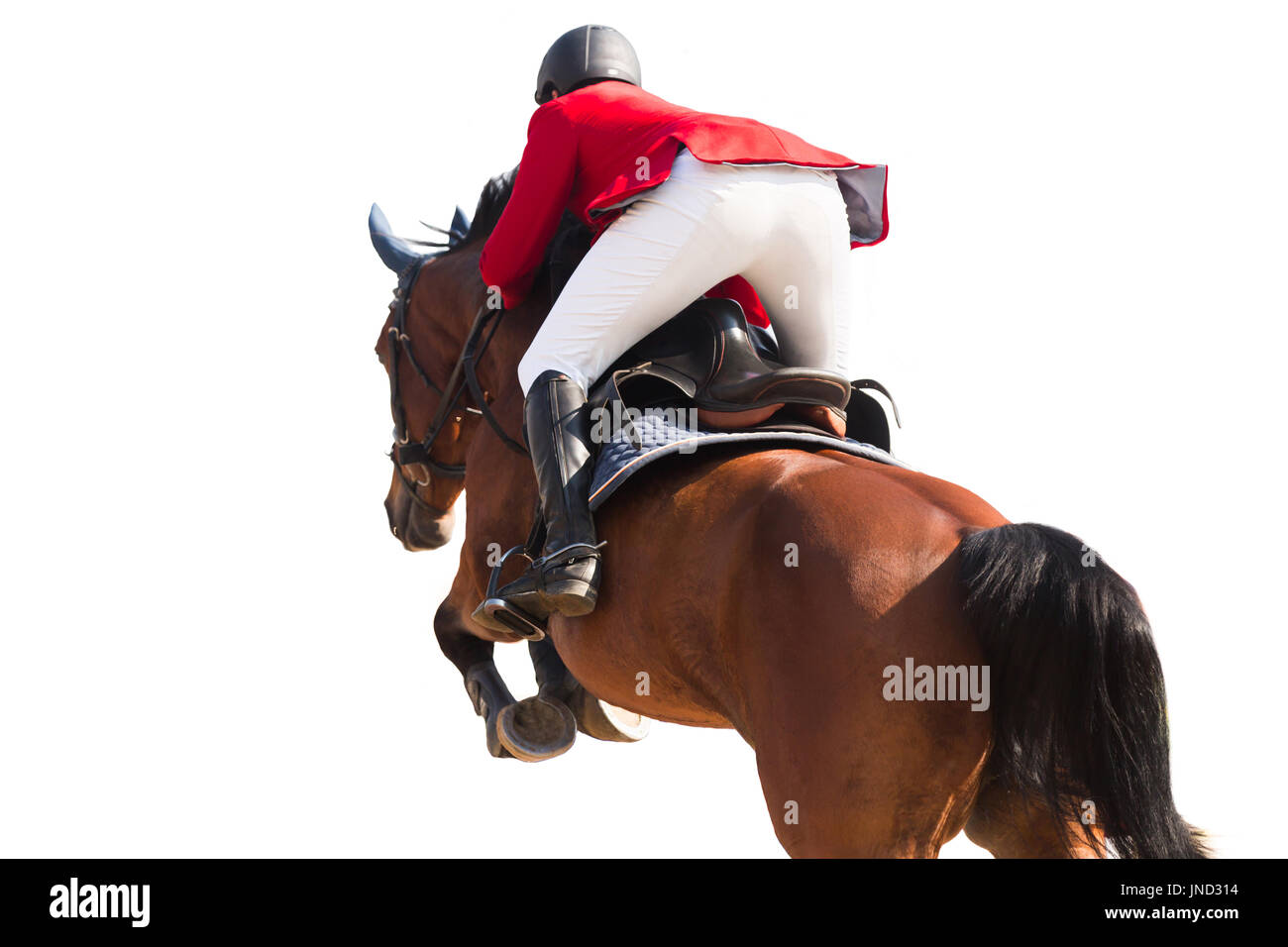Equestrian Sports, Horse Jumping Event, Isolated on White Background - Stock Image