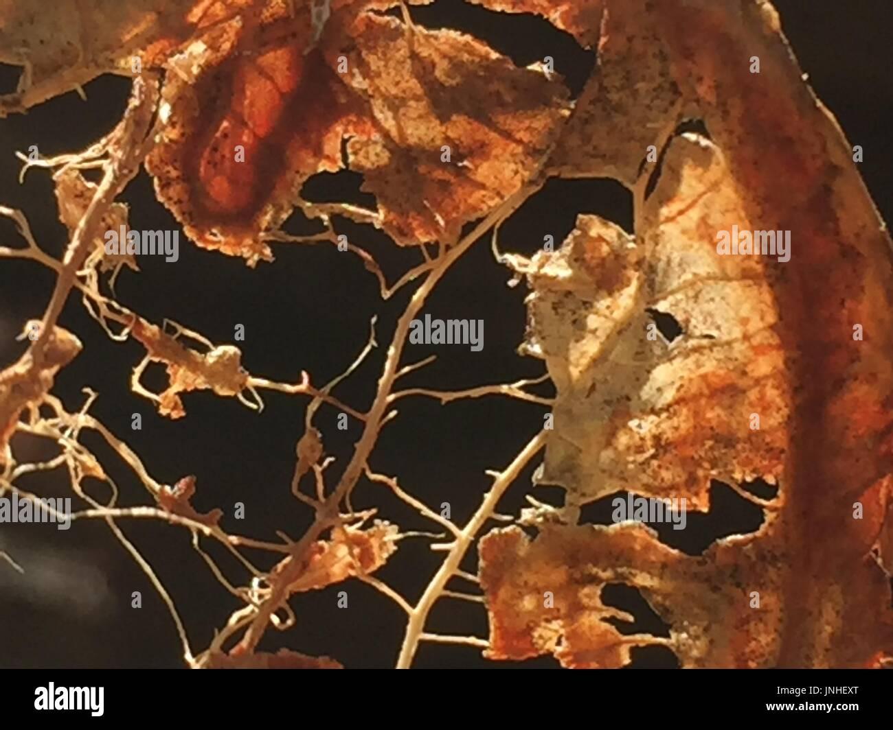 invertebrate - Stock Image